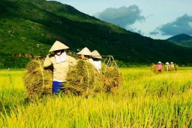 Harvesting. Source: http://www.vn-zoom.com/